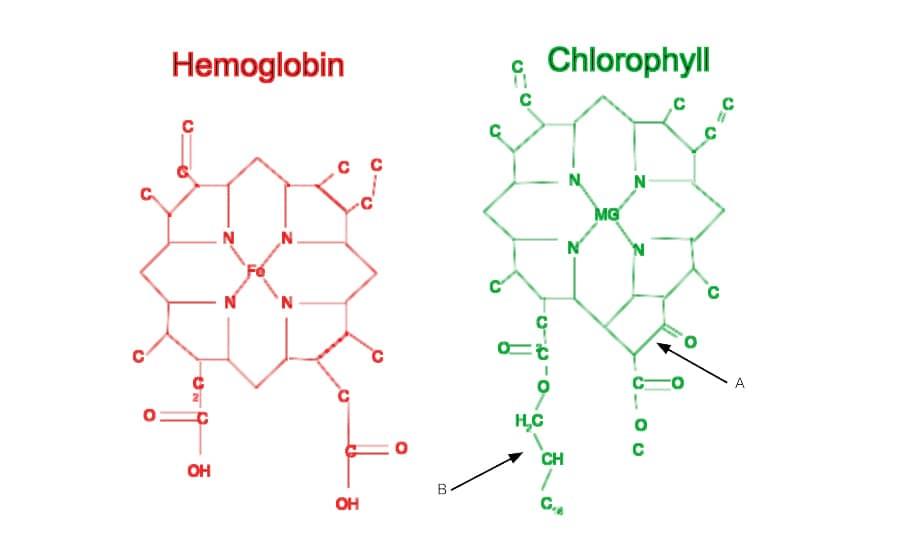 high-quality liquid chlorophyll