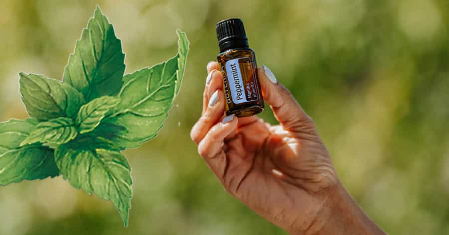 Peppermint oil for stomach pain